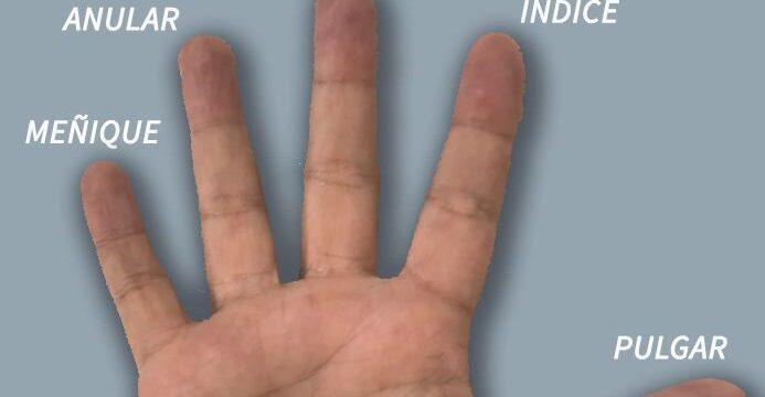 Los dedos de la mano